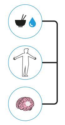 Die Thermoregulation des menschlichen Körpers